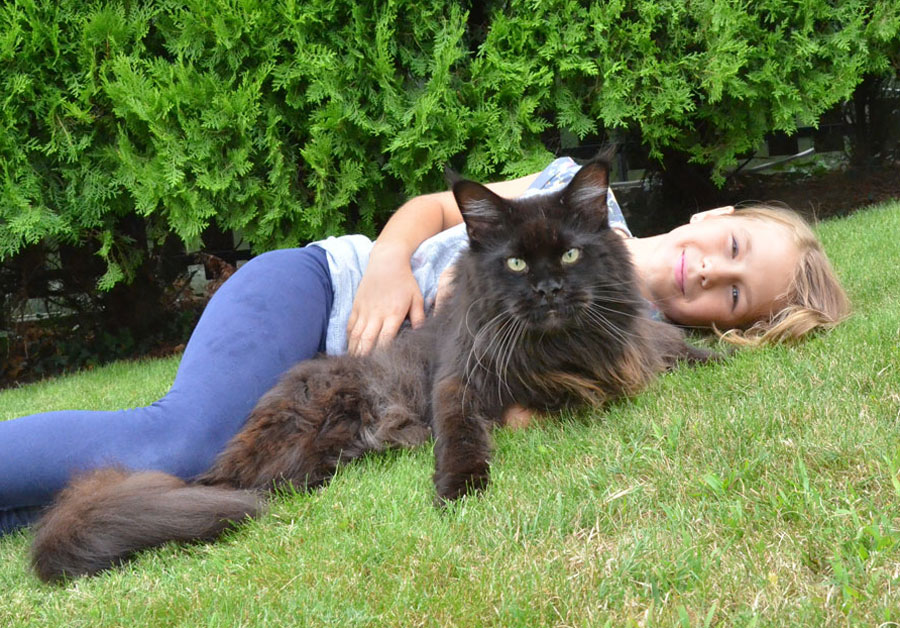 Maine Coon And Dog Video